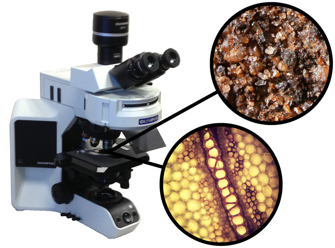 A microscope with two zoomed in pictures of a rock and piece of plant tissue